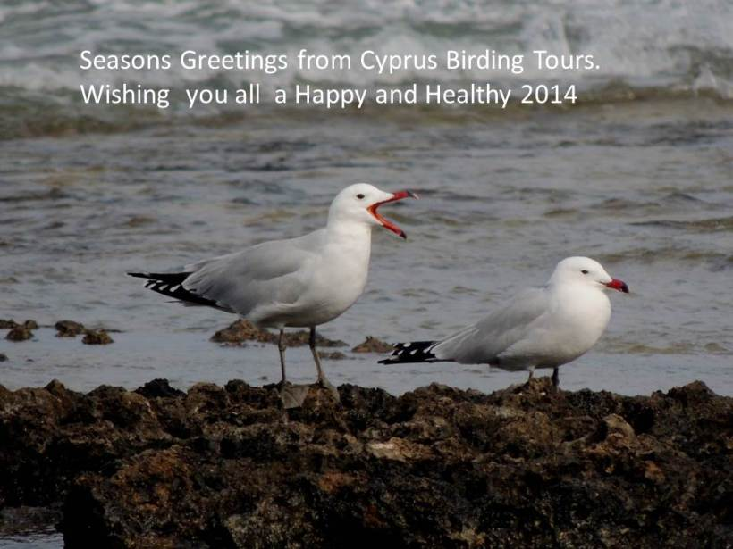 Seasons Greetings from Cyprus Birding Tours 2013