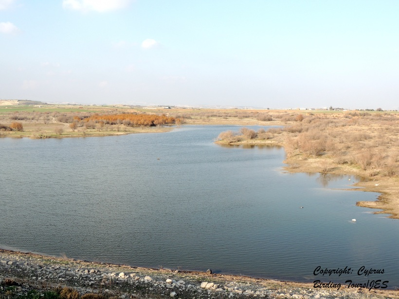 Kiti Dam January 15th 2014 (C) Cyprus Birding Tours