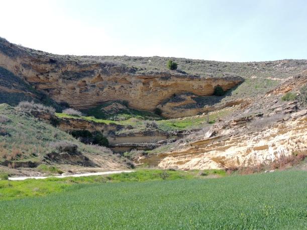 Agios Sozomenos 7th February 2014 (c) Cyprus Birding Tours