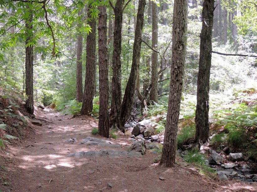 Caledonia Trail near Troodos 11th July 2014 (c) Cyprus Birding Tours