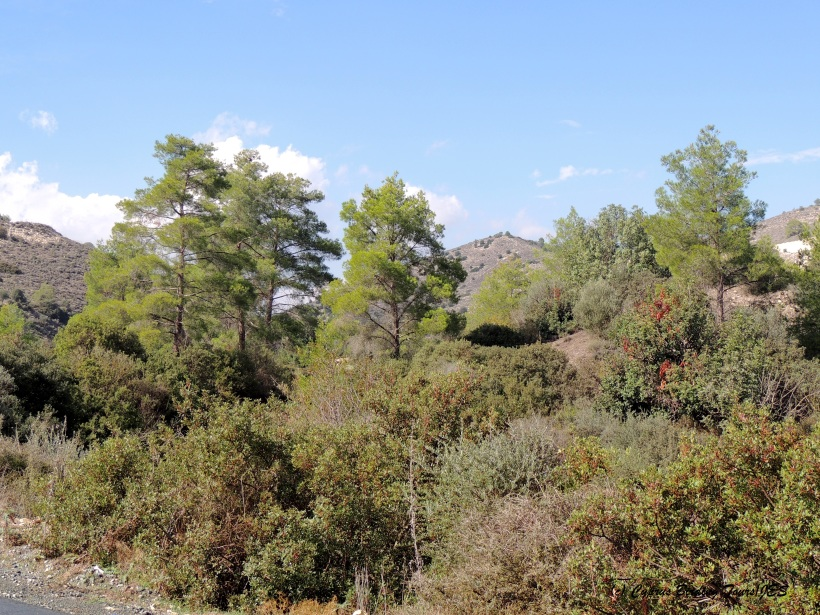 Panagia Stazousa 31st October 2014 (c) Cyprus Birding Tours