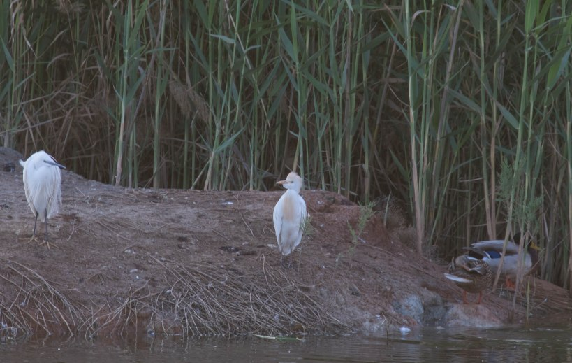 Zakaki Marsh, late afternoon 17th March 2016 (c) Cyprus Birding Tours