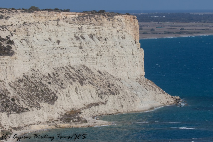 Kensington Cliffs, 22nd September 2016 (c) Cyprus Birding Tours