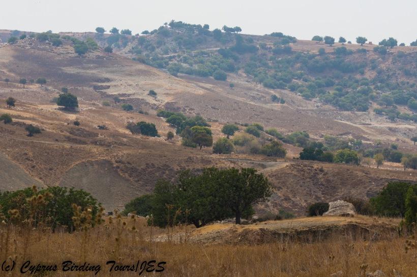 Arodes 19th September 2017 (c) Cyprus Birding Tours