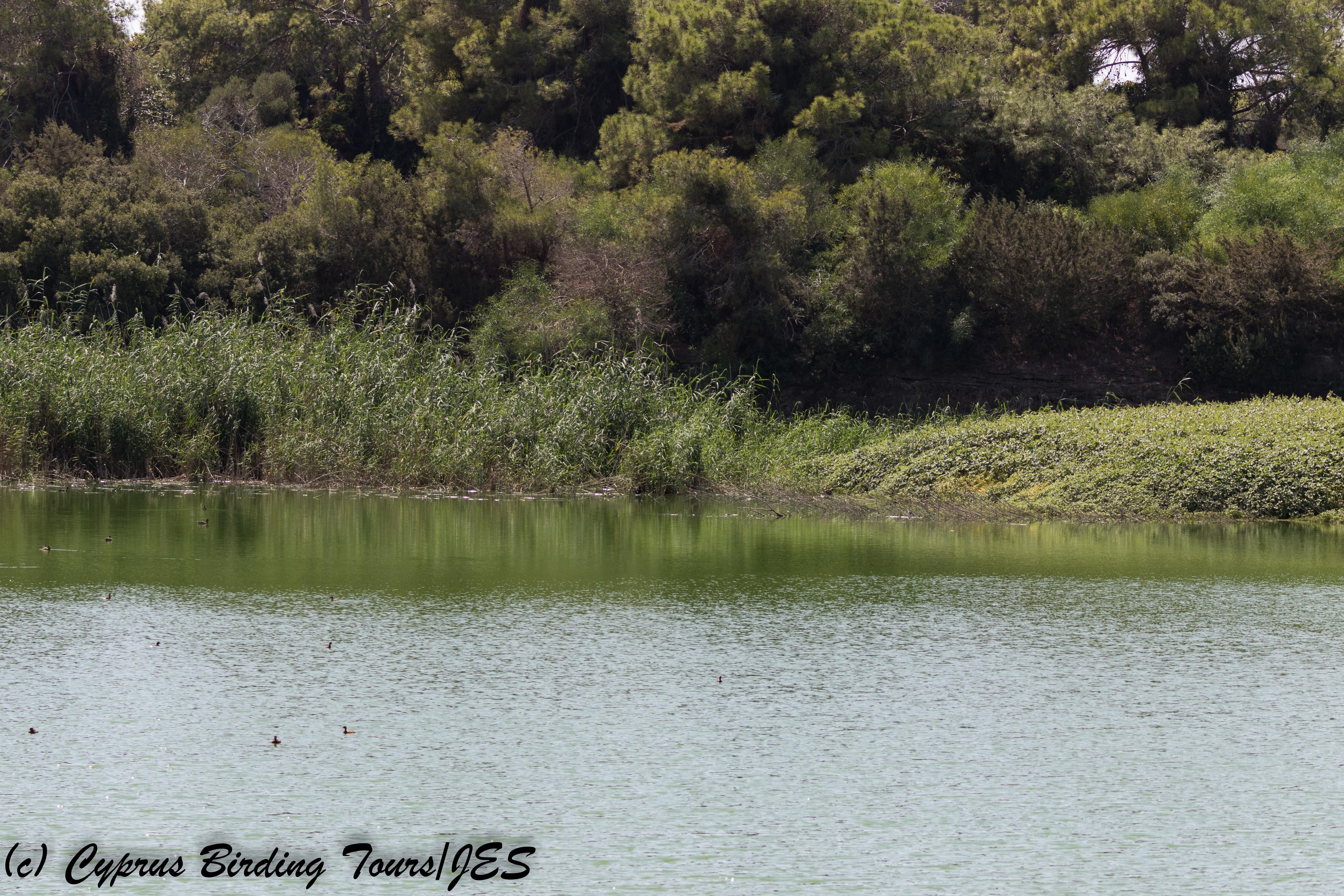 Bishop's Pool 12 September 2017 (c) Cyprus Birding Tours