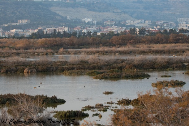 Oroklini Marsh 6th February 2018 (c) Cyprus Birding Tours