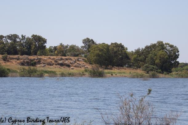 Achna Dam 6th June 2020 (c) Cyprus Birding Tours
